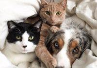 Suņu un kaķu neparastā draudzība 15 bildēs FOTO