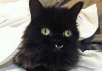 Vampīrkaķis: izglābts kaķis ar dīvainiem zobiem iekaro internetu. FOTO