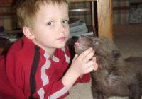 Viņš atrada divus lācēnus un nolēma tos izaudzināt. Lūk, kas no tā iznāca! FOTO