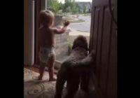 Mazulis un suns pamanīja tēti atgriežamies mājās, viņu reakcija ir apburoša VIDEO