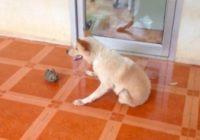Suns bez pakaļkājām, ar apbrīnojamu dzīvotgribu FOTO, VIDEO