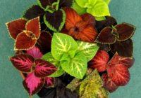 10 istabas augi, kas ļaus elpot vieglāk! FOTO