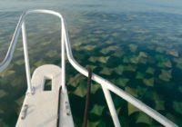 Ieraugot ko tādu pie savas laivas, var nobīties ne pa jokam! FOTO