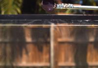 Iespaidīgi, lūk kas notiks ja akvārijā ievietos izkausētu sāli VIDEO