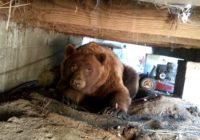 Brīnišķīga lāča reakcija uz to, kad saimnieks patriec viņu no sava lieveņa! VIDEO