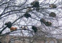 """Pavasaris klāt- kaķi """"atlidojuši""""! FOTO"""