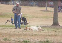 Jūs domājat, ka suns ir beigts? Nē, viņš vienkārši negrib iet mājās! VIDEO