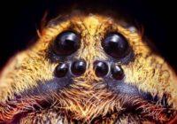 Kā uzzināt vai zirnekļis  jums uzglūn no tumsas?!