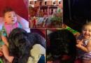 Aizkustinoši: Suns ziedo savu dzīvību, lai glābtu mazo saimnieci! FOTO, VIDEO