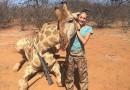 Meitene kura tikko nošāvusi žirafi: «Tas ir mans hobijs, es neapstāšos» FOTO, VIDEO