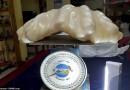 Zvejnieka iespaidīgais loms – Pērle ar svaru 34 kg un vērtību $ 100,000,000
