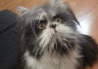 Interneta lietotāji apjukuši: kas redzams fotogrāfijā- kaķis vai suns? FOTO