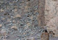 Uzmanības tests: atrodiet šajā attēlā leopardu! FOTO