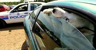 Sieviete uzkarsušā auto atstāja suni. Lūk, kā policists viņu pārmācīja. VIDEO