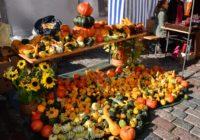 Mārupes novada Aktīvā tūrisma sezonas noslēgums un Rudens ražas gadatirgus jau šo sestdien