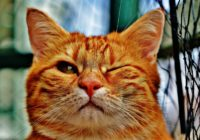 15 veidi, kā atbrīvoties no spalvām. Šis video jāredz visiem kaķu saimniekiem!