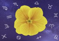 Edgara Alana horoskops 4. maijam: paša krekls tuvāks!