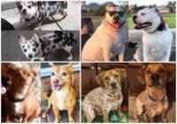 Laiks nomest ziemas riepu! 20 suņu foto, kas pierāda – tas ir iespējams