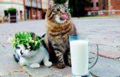 """Turlais pielabinās """"Ušakova kaķiem""""? Kuzja un Muris varēšot palikt domē!"""