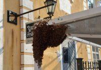 VIDEO: Karstums mudina bites spietot; spiets apsēdis pat restorānu Vecrīgā!