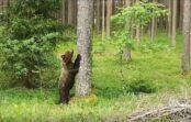 """FOTO, VIDEO: Divi lāči """"sveicina"""" autovadītājus ceļā no Rūjienas uz Valmieru"""