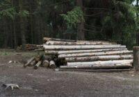 Ierīkojot robežu ar Krieviju, izcirsti un pazuduši koki simtiem tūkstošu vērtībā