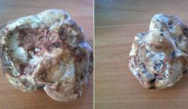 FOTO: Ja ir trifeles, būs arī baravikas! Latvijas pierobežā atrasta supersēne