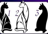 TESTS. Izvēlies kaķi un uzzini, cik neatkarīgs cilvēks esi!