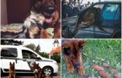 """Lasot Latvijas policijas suņa Drako """"atvadu vēstuli"""", acīs sariešas asaras (VIDEO)"""