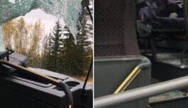"""FOTO: Stirna Kurzemē ielec pa autobusa logu; šoferis """"bezbiļetnieku"""" izlaiž pa durvīm"""