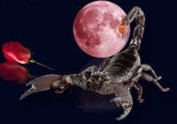 Novembra valdnieks Skorpions: slēpts jūtīgums un milzu enerģija