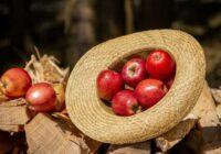 Kas notiks ar organismu, ja regulāri ēdīsi ābolus. Dziednieciskas receptes
