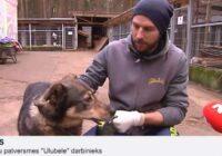 VIDEO: Uguņošanas dēļ aizmukušie suņi joprojām gaida saimniekus patversmēs