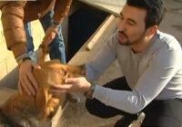 FOTO: Cik mīļi – līdzjūtīgs puisis izglābj 350 suņus!