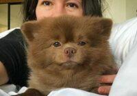FOTO: Mazo sunīti pameta, jo tas esot par lielu pārdošanai. Tagad viņš ir zvaigzne!