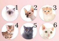 Vācu psihologu tests: izvēlies kaķi un uzzini savas spējas!