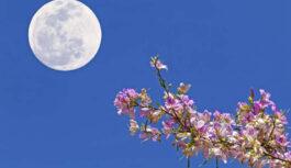 7. maija Pilnmēness nesīs laimi trīs horoskopa zīmēm