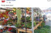 Pārsteigums: Godmaņa kundze Āgenskalna tirgū andelē puķes podiņos
