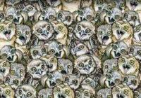 Optiskā ilūzija: atrodi attēlā kaķus. Tas izdodas tikai 15% cilvēku!