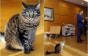 Kaķuvīra Ušakova mīlulis Kuzja Rātsnamā vairs neatgriezīsies (VIDEO)