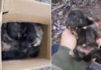 Milzīga cietsirdība: Ropažu novadā mežā atrod 10 jaundzimušus kucēnus