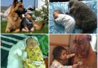 FOTO: Aizkustinošas bildes, kā mājas mīluļi pieskata mazus bērnus!