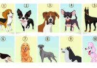 TESTS. Izvēlies savu mīļāko suņu šķirni un uzzini, ko tas liecina par tevi!