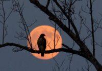 30. novembra pilnmēness un aptumsums. Ko labāk nedarīt šajā dienā?