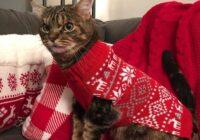 FOTO: Jauna interneta slavenība – dusmīgais kaķis Smiekliņš
