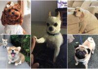 Piecas labākās suņu šķirnes saimniekiem – iesācējiem