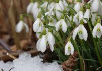 Laika vērotāja prognozes: kāds marts būs šogad?