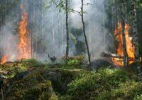 VIDEO: Jaunciemā plosās plašs meža ugunsgrēks; cietuši divi ugunsdzēsēji